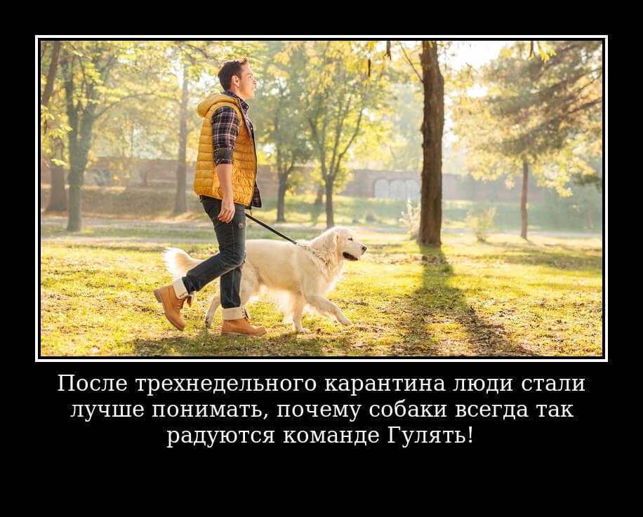 После трехнедельного карантина люди стали лучше понимать, почему собаки всегда так радуются команде «Гулять!»