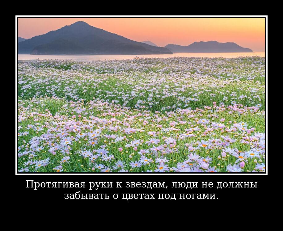 Протягивая руки к звездам, люди не должны забывать о цветах под ногами.