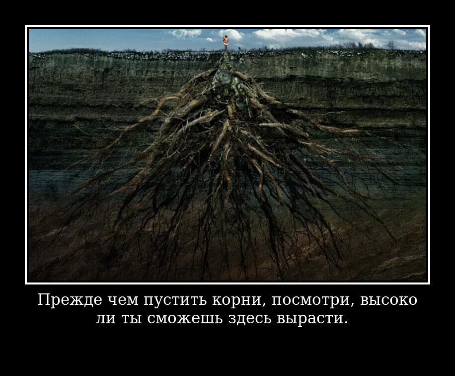 Прежде чем пустить корни, посмотри, высоко ли ты сможешь здесь вырасти.