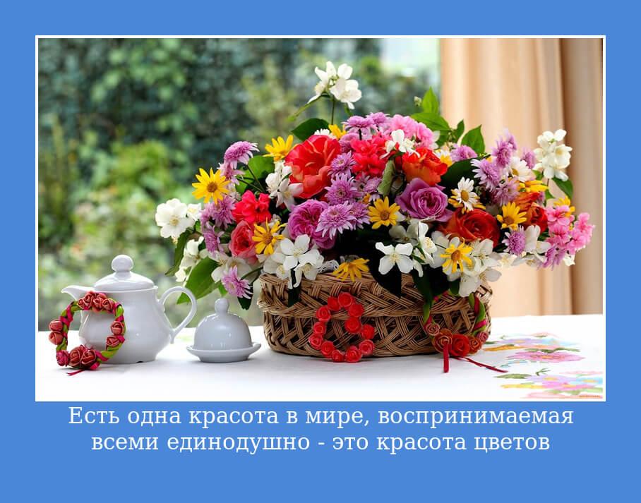 Есть одна красота в мире, воспринимаемая всеми единодушно — это красота цветов.