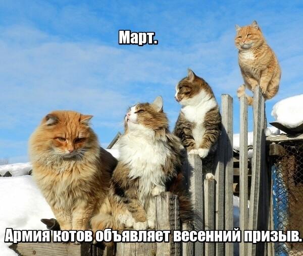 Март. Армия котов объявляет весенний призыв.