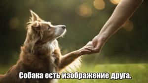 Собака есть изображение друга.