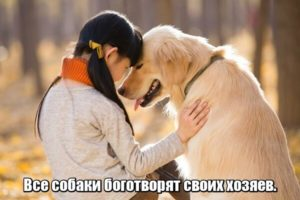 Все собаки боготворят своих хозяев.