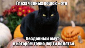 Глаза черных кошек – это бездонный омут, в котором точно черти водятся.