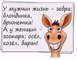 У мужчин жизнь - зебра: блондинка, брюнетка! А у женщин - зоопарк: осел, козел, баран!