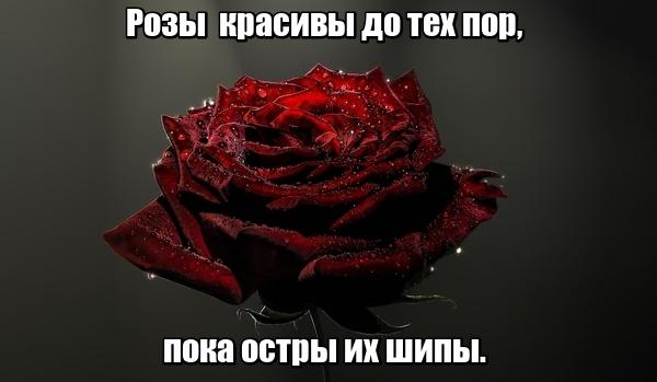 Розы красивы до тех пор, пока остры их шипы.