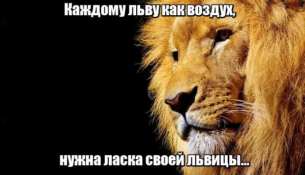 Каждому льву как воздух, нужна ласка своей львицы…