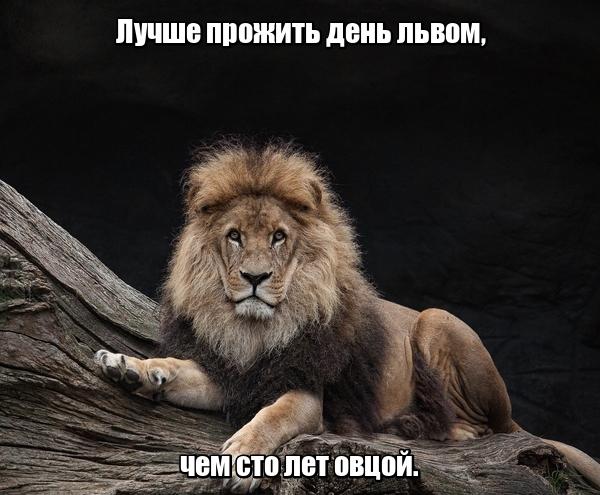 Лучше прожить день львом, чем сто лет овцой.