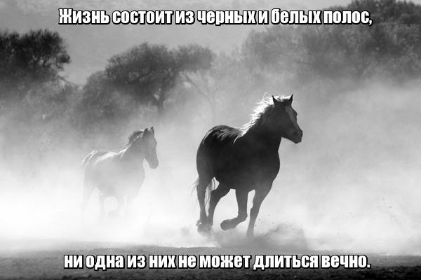 Жизнь состоит из черных и белых полос, ни одна из них не может длиться вечно.