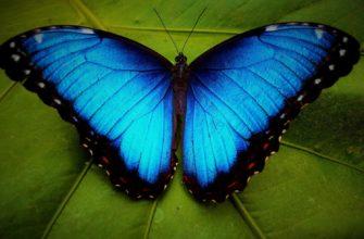 Бабочка на листике. Какие есть статусы про бабочку.
